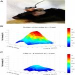 Online LI-rTMS during a Visual Learning Task: Differential Impacts on Visual Circuit and Behavioral Plasticity in Adult Ephrin-A2A5<sup>–/–</sup> Mice