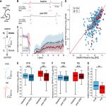 Transient Oxygen-Glucose Deprivation Causes Region- and Cell Type-Dependent Functional Deficits in the Mouse Hippocampus <em>In Vitro</em>