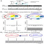 Sigh and Eupnea Rhythmogenesis Involve Distinct Interconnected Subpopulations: A Combined Computational and Experimental Study
