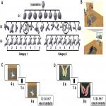 Visual and Tactile Sensory Systems Share Common Features in Object Recognition