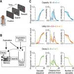 Ketamine-Induced Alteration of Working Memory Utility during Oculomotor Foraging Task in Monkeys