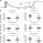 Novel Quantitative Analyses of Spontaneous Synaptic Events in Cortical Pyramidal Cells Reveal Subtle Parvalbumin-Expressing Interneuron Dysfunction in a Knock-In Mouse Model of Alzheimer's Disease