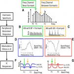 Speech Coding in the Brain: Representation of Vowel Formants by Midbrain Neurons Tuned to Sound Fluctuations