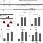 The Isl1-Lhx3 Complex Promotes Motor Neuron Specification by Activating Transcriptional Pathways that Enhance Its Own Expression and Formation
