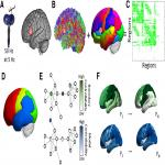 Language Tasks and the Network Control Role of the Left Inferior Frontal Gyrus