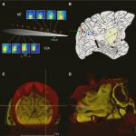 Neural Selectivity for Visual Motion in Macaque Area V3A