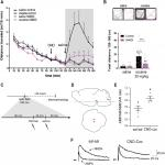 Locomotor- and Reward-Enhancing Effects of Cocaine Are Differentially Regulated by Chemogenetic Stimulation of Gi-Signaling in Dopaminergic Neurons
