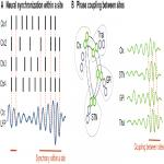 Mechanisms of Network Interactions for Flexible Cortico-Basal Ganglia-Mediated Action Control