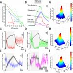 The Inhibitory Thermal Effects of Focused Ultrasound on an Identified, Single Motoneuron