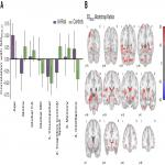 Resting State BOLD Variability of the Posterior Medial Temporal Lobe Correlates with Cognitive Performance in Older Adults with and without Risk for Cognitive Decline