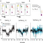 Increasing Motor Noise Impairs Reinforcement Learning in Healthy Individuals