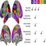 Topographical Organization of Attentional, Social, and Memory Processes in the Human Temporoparietal Cortex
