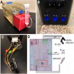 DIY-NAMIC Behavior: A High-Throughput Method to Measure Complex Phenotypes in the Homecage
