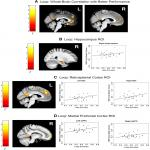 Individual Differences in Human Path Integration Abilities Correlate with Gray Matter Volume in Retrosplenial Cortex, Hippocampus, and Medial Prefrontal Cortex