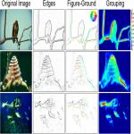 Figure-Ground Organization in Natural Scenes: Performance of a Recurrent Neural Model Compared with Neurons of Area V2