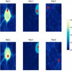 HNCcorr: A Novel Combinatorial Approach for Cell Identification in Calcium-Imaging Movies
