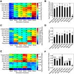 Beta Frequency Oscillations in the Subthalamic Nucleus Are Not Sufficient for the Development of Symptoms of Parkinsonian Bradykinesia/Akinesia in Rats
