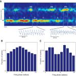 Network Mechanisms Generating Abnormal and Normal Hippocampal High-Frequency Oscillations: A Computational Analysis