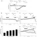 Leptin Induces a Novel Form of NMDA Receptor-Dependent LTP at Hippocampal Temporoammonic-CA1 Synapses