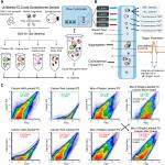 Critical Analysis of Particle Detection Artifacts in Synaptosome Flow Cytometry