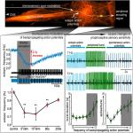 State-Dependent Modification of Sensory Sensitivity via Modulation of Backpropagating Action Potentials