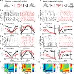 Hetereogeneity in Neuronal Intrinsic Properties: A Possible Mechanism for Hub-Like Properties of the Rat Anterior Cingulate Cortex during Network Activity