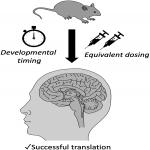Considerations for Clinical Therapeutic Development of Statins for Neurodevelopmental Disorders