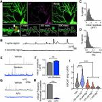Properties of Individual Hippocampal Synapses Influencing NMDA-Receptor Activation by Spontaneous Neurotransmission