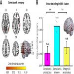 No Evidence for Neural Overlap between Unconsciously Processed and Imagined Stimuli