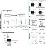 Limited Sensitivity of Hippocampal Synaptic Function or Network Oscillations to Unmodulated Kilohertz Electric Fields