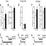 New Hippocampal Neurons Mature Rapidly in Response to Ketamine But Are Not Required for Its Acute Antidepressant Effects on Neophagia in Rats