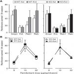 Glucagon-Like Peptide-1 Receptor Agonist Treatment Does Not Reduce Abuse-Related Effects of Opioid Drugs