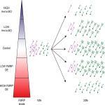 FMRP Regulates Neurogenesis <em>In Vivo</em> in <em>Xenopus laevis</em> Tadpoles