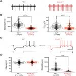 Refining the Identity and Role of Kv4 Channels in Mouse Substantia Nigra Dopaminergic Neurons
