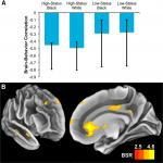 Motivation Modulates Brain Networks in Response to Faces Varying in Race and Status: A Multivariate Approach