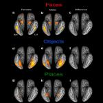 Investigating the Influence of Biological Sex on the Behavioral and Neural Basis of Face Recognition