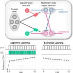 A Mechanistic Model for Reward Prediction and Extinction Learning in the Fruit Fly
