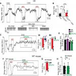 Adenosine Signaling through A1 Receptors Inhibits Chemosensitive Neurons in the Retrotrapezoid Nucleus