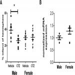 Sex Steroids Do Not Modulate TRPM2-Mediated Injury in Females following Middle Cerebral Artery Occlusion