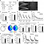 Within-Trial Persistence of Learned Behavior as a Dissociable Behavioral Component in Hippocampus-Dependent Memory Tasks: A Potential Postlearning Role of Immature Neurons in the Adult Dentate Gyrus