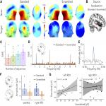 Fast Periodic Auditory Stimulation Reveals a Robust Categorical Response to Voices in the Human Brain