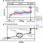 Transition from Target to Gaze Coding in Primate Frontal Eye Field during Memory Delay and Memory–Motor Transformation
