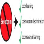 Preservation of Essential Odor-Guided Behaviors and Odor-Based Reversal Learning after Targeting Adult Brain Serotonin Synthesis