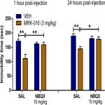 A Negative Allosteric Modulator for α5 Subunit-Containing GABA Receptors Exerts a Rapid and Persistent Antidepressant-Like Action without the Side Effects of the NMDA Receptor Antagonist Ketamine in Mice