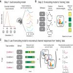 Inverted Encoding Models Assay Population-Level Stimulus Representations, Not Single-Unit Neural Tuning