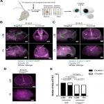 Lytic Cell Death in Specific Microglial Subsets Is Required for Preventing Atypical Behavior in Mice