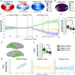 Team Flow Is a Unique Brain State Associated with Enhanced Information Integration and Interbrain Synchrony