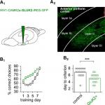 A Cellular Mechanism Underlying Enhanced Capability for Complex Olfactory Discrimination Learning