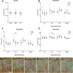 Aging Does Not Affect Axon Initial Segment Structure and Somatic Localization of Tau Protein in Hippocampal Neurons of Fischer 344 Rats