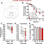 Age-Related Declines in Prefrontal Cortical Expression of Metabotropic Glutamate Receptors that Support Working Memory